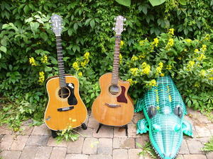 2 Guitars with Crocodile