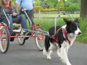 Dog Scooter, Sacco Dog Cart - Fahrtraining mit Hunden!