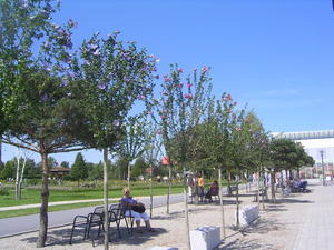 Hibiscus-Allee in Oranienburg