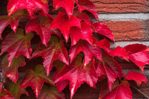Herbstliches Rot
