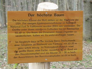 Baumkronenpfad im Nationalpark Hainich (Thringen) bei Bad Langensalza