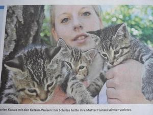 PEINER WOCHE JUNI 2010 ..... es geht den Katzen gut :-))
