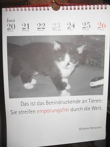 Warum Tiere besser dran sind als wir...