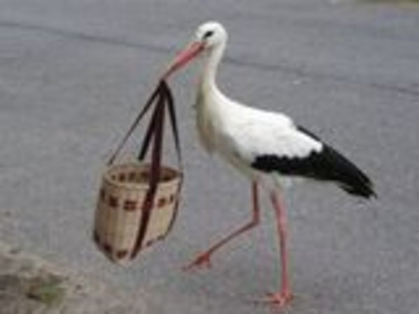 Storch beim Einkaufen !