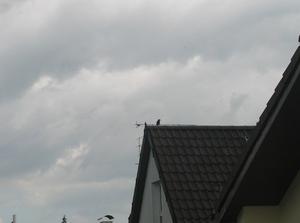 Sommer 2011 in Waldperlach, Teil 45