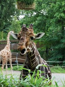 Tiere im Duisburger Zoo
