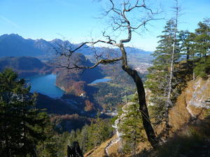 Knig Ludwigs Mrchenlandschaft - Blick auf den Alpsee