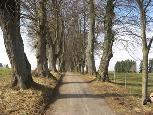 Allee zwischen Schongau und Marktoberdorf