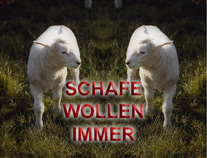 SCHAFE WOLLEN IMMER