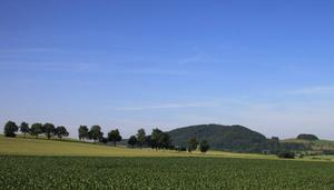 Im Feld unterwegs