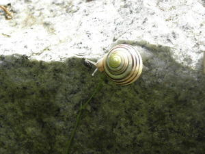 Schnecke auf Wanderschaft