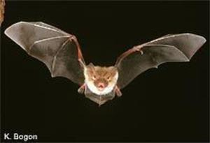 Bat Night - Fledermausnacht