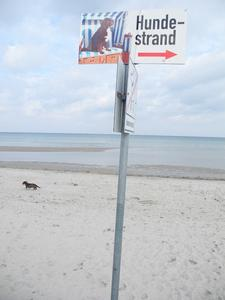Falsch - richtig am Hundestrand