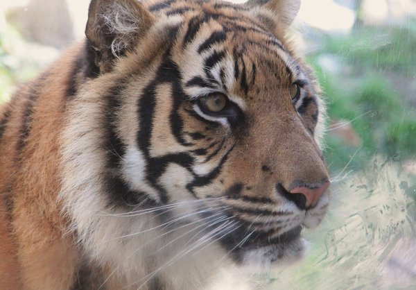 Copyright: Werner Jung Bad Ems- Zoo Lissabon