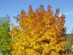 . . . der Herbst hinterlt seine Spuren in Schwalenberg, 'Indian Summer' ? . . .
