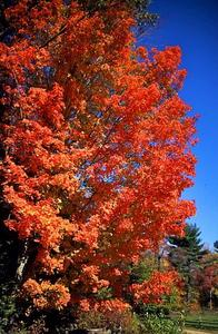 Indian Summer in Massachusetts/Ostküste der USA