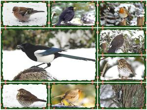 Collage, Vögel im Winter !