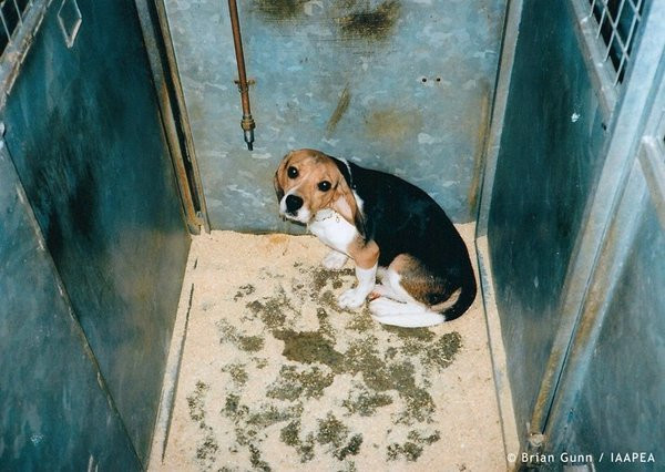 Illegal Dog Breeding In Uk