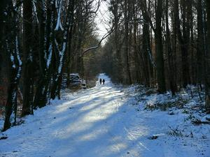 Winterwald im Deister