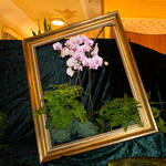 11. Orchideenausstellung in Bad Eilsen