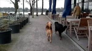 17.02.2013 / 2. Runde mit Gina & Oskar