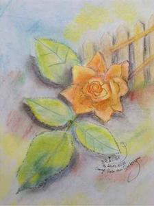Orange-Rose-Gartenzaun-mit-Pastel-Pencil-24x32cm