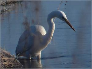 Fischer in frostigem Wasser