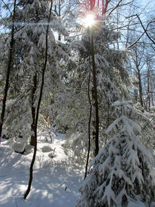 Die Sonne dringt in den Winterwald.
