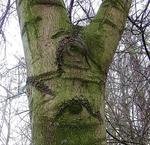 Der Augen-Baum ...