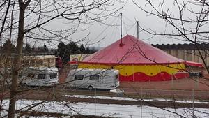Cirkus 'Casselly' gastiert am 5.4.2013 in Nebra !