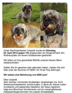 Rauhaardackel 'Leopold' aus Mnchen vermisst!