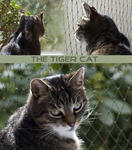 The Tiger Cat