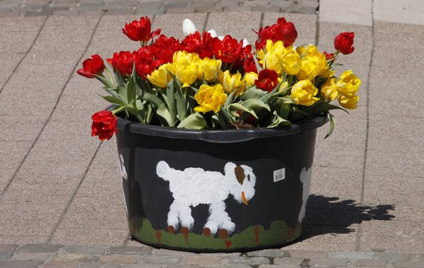 Tulpenfest in Willingen