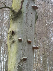 Was ist mit dem Baum passiert ??