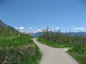 Wandern in Algund-Sdtirol, am 'Saxnerweg', April, 2013.