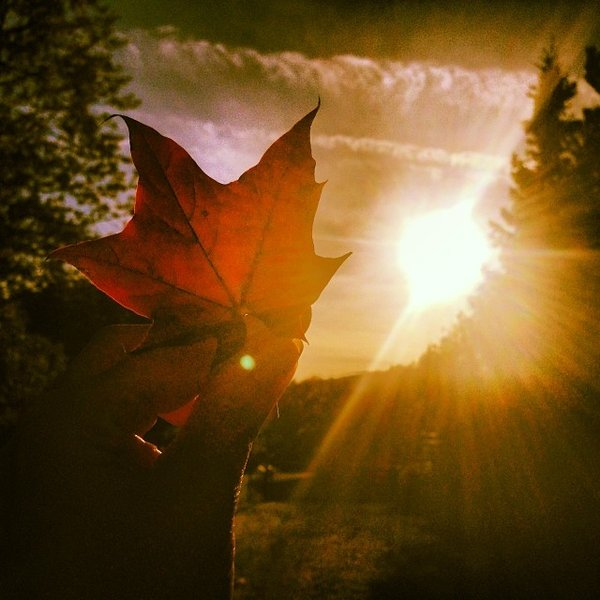 herbst, sonne, spaziergang