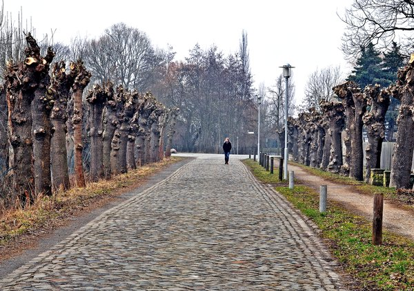 allee, allee-in-rethmar