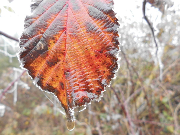 naturfotografie, winter, blatt, marburger-land, morgenreif