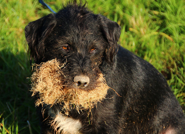 tiere, natur-pur, hunde-liebling, buddeln