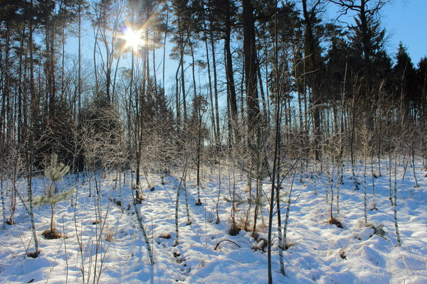 winter, sonne, winterlandschaft