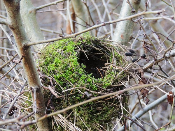 vogel, nest