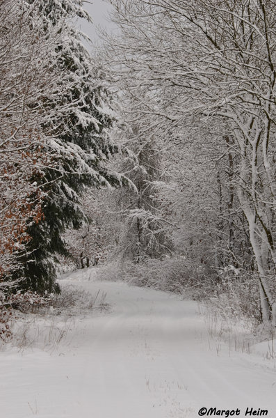 winter, winterwald