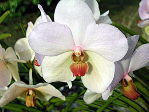 04.01.2003 Barbados. Orchideen Welt