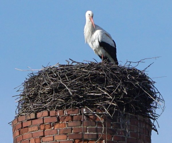 storch-2016, friederikenstr