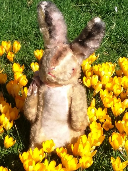 ostern, hase