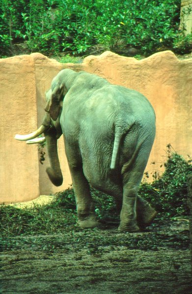 zoo, elefant, cool