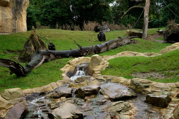 tiere, zoo, zoo-hannover, affen