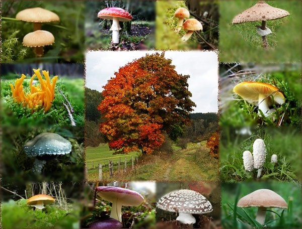 herbst, pilze, collage