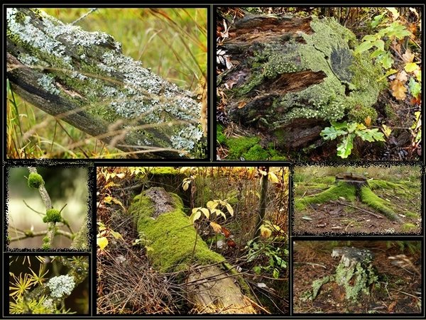 natur, collage, moos, flechten