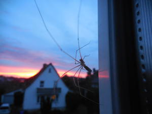 Spinne am Morgen (22.11.2016) ...